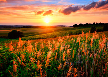 Red bright ummer sunset on a bis green meadow