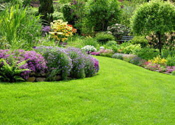 Big colorful Garden with flowers bushes and green meadow
