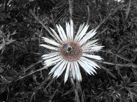 flower plant bumblebee bloom blossom flourish