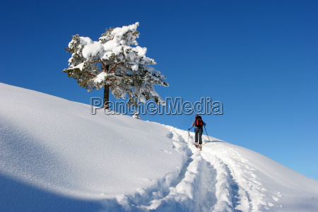 blue sport sports tree winter snowy