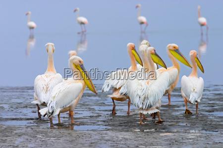 flamingo, road - 60002