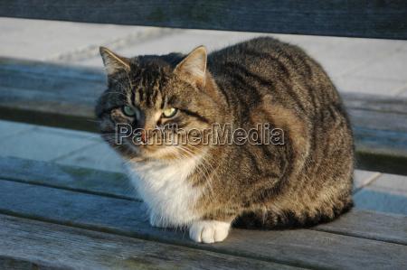 cat - 73053