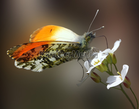 the, butterfly - 113994