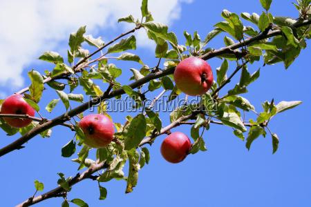 small, autumn, messenger - 120528