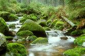 wildbach im nordschwarzwald