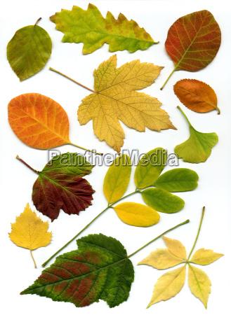 autumn, leaves, 2 - 123294