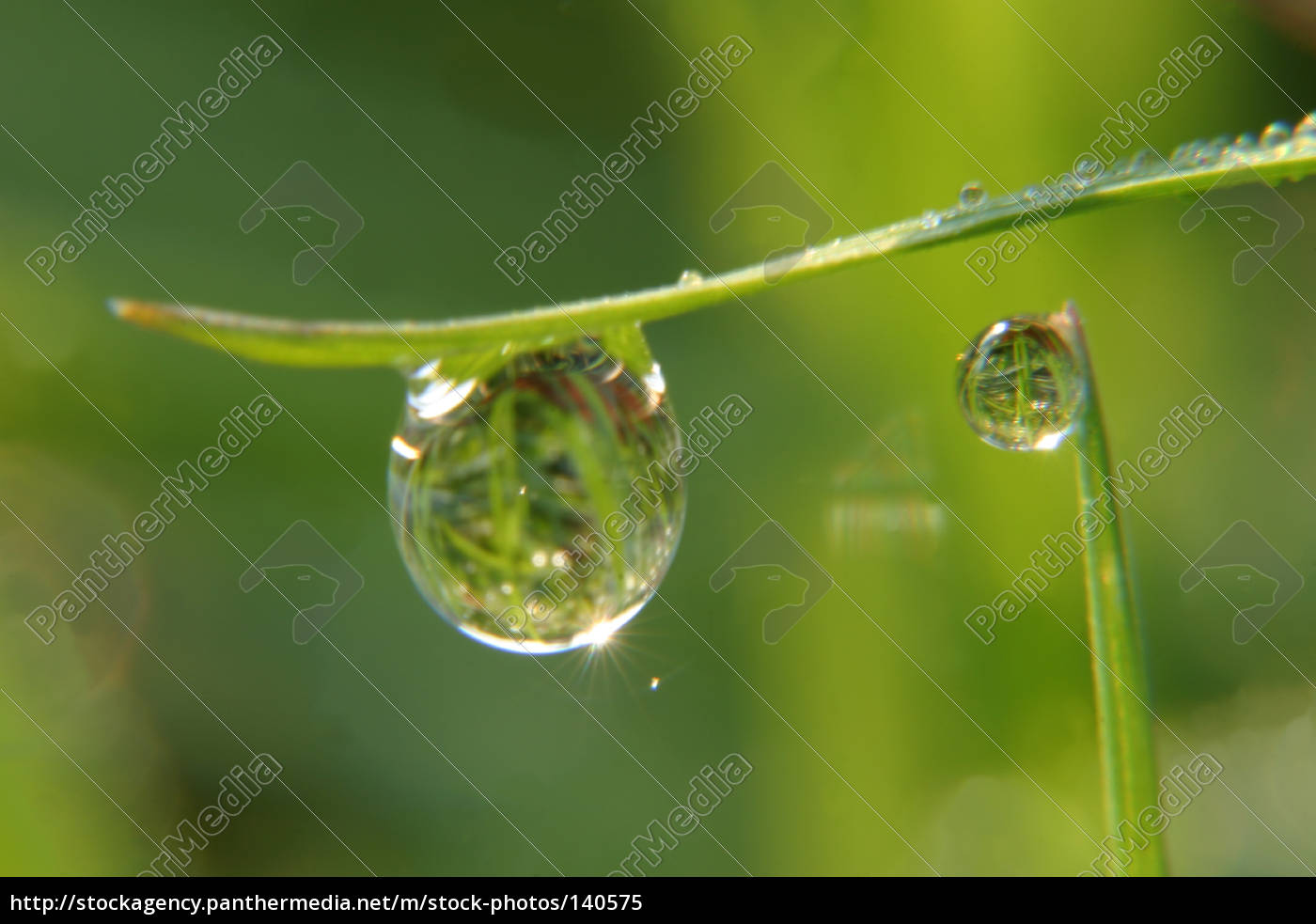 drops, with, reflection - 140575