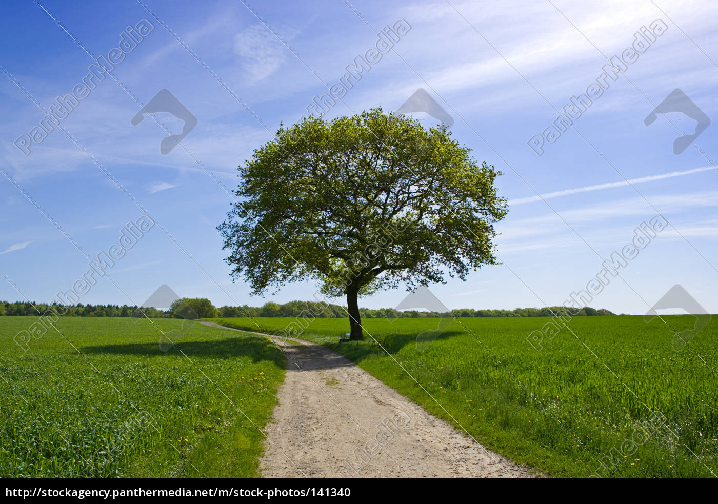 tree, on, the, way - 141340