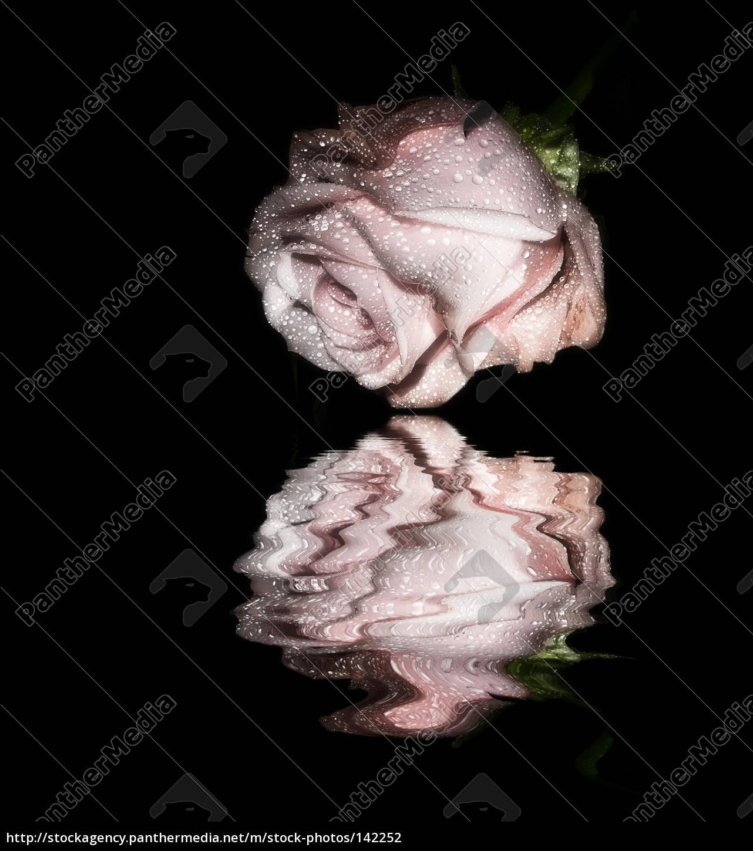 reflection - 142252