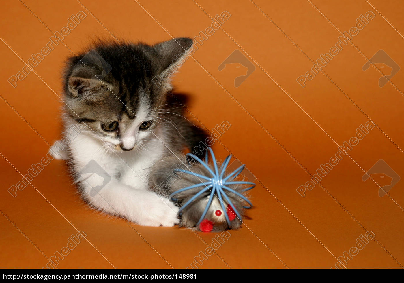 cat, and, mouse - 148981