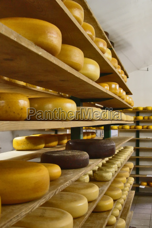 all, cheese, -, or, what? - 152629