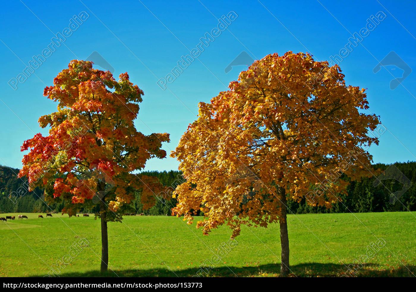 autumn, duet - 153773