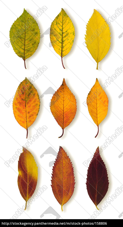 autumn, leaves, ii - 158806