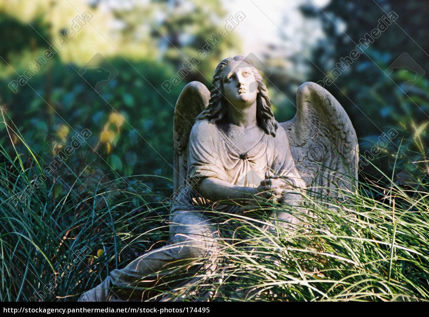 angel - 174495
