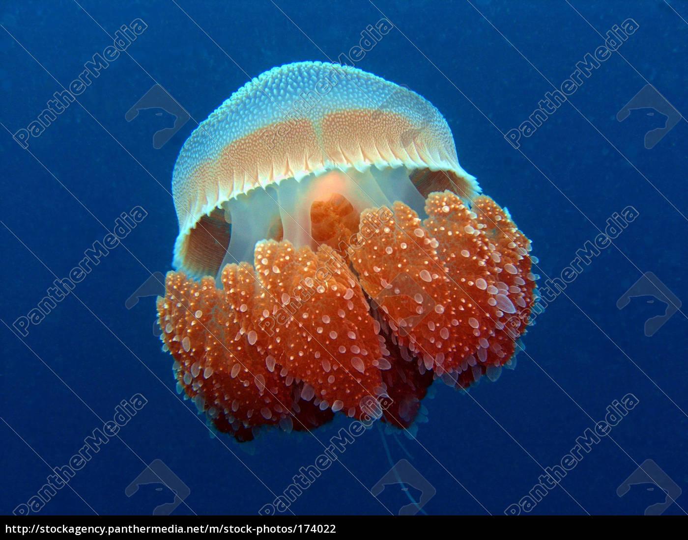 beauty, of, the, sea - 174022