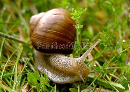 slug - 174139