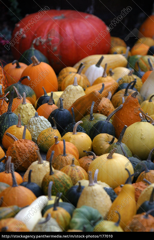 many, pumpkins - 177010