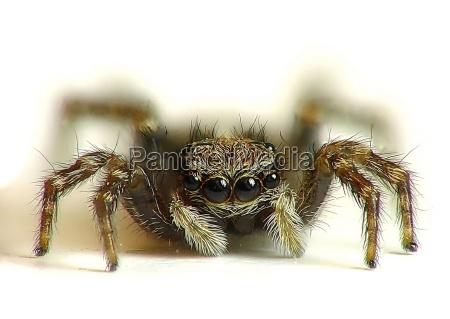 big, wide, eyes - 178098