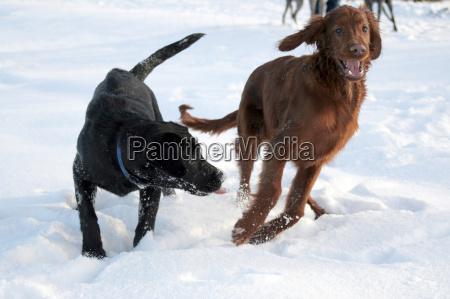 fun, in, the, snow, 2 - 180925