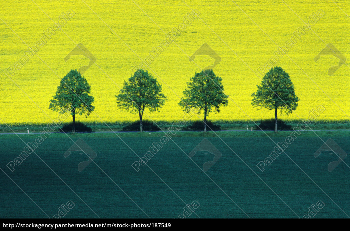 green, and, yellow - 187549