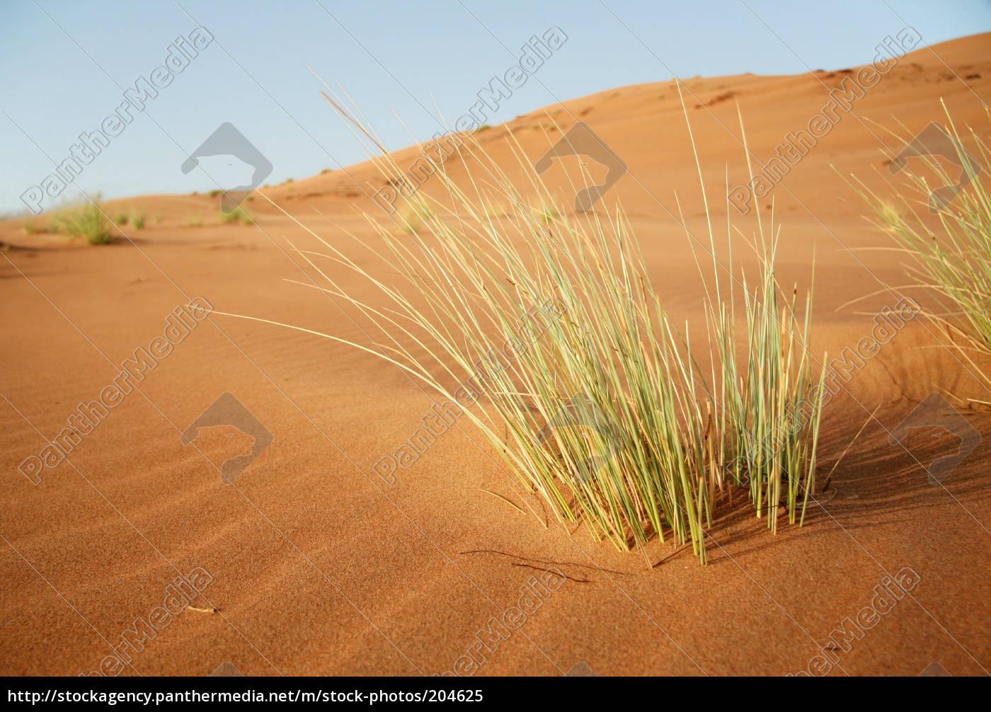 life, in, the, desert - 204625