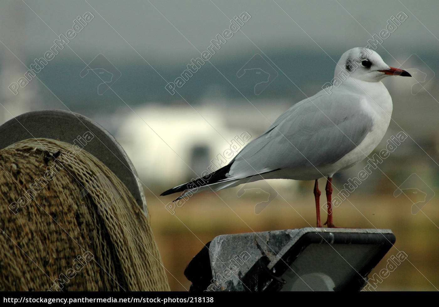 seagull, in, the, harbor, of, honfleur, normandy - 218138