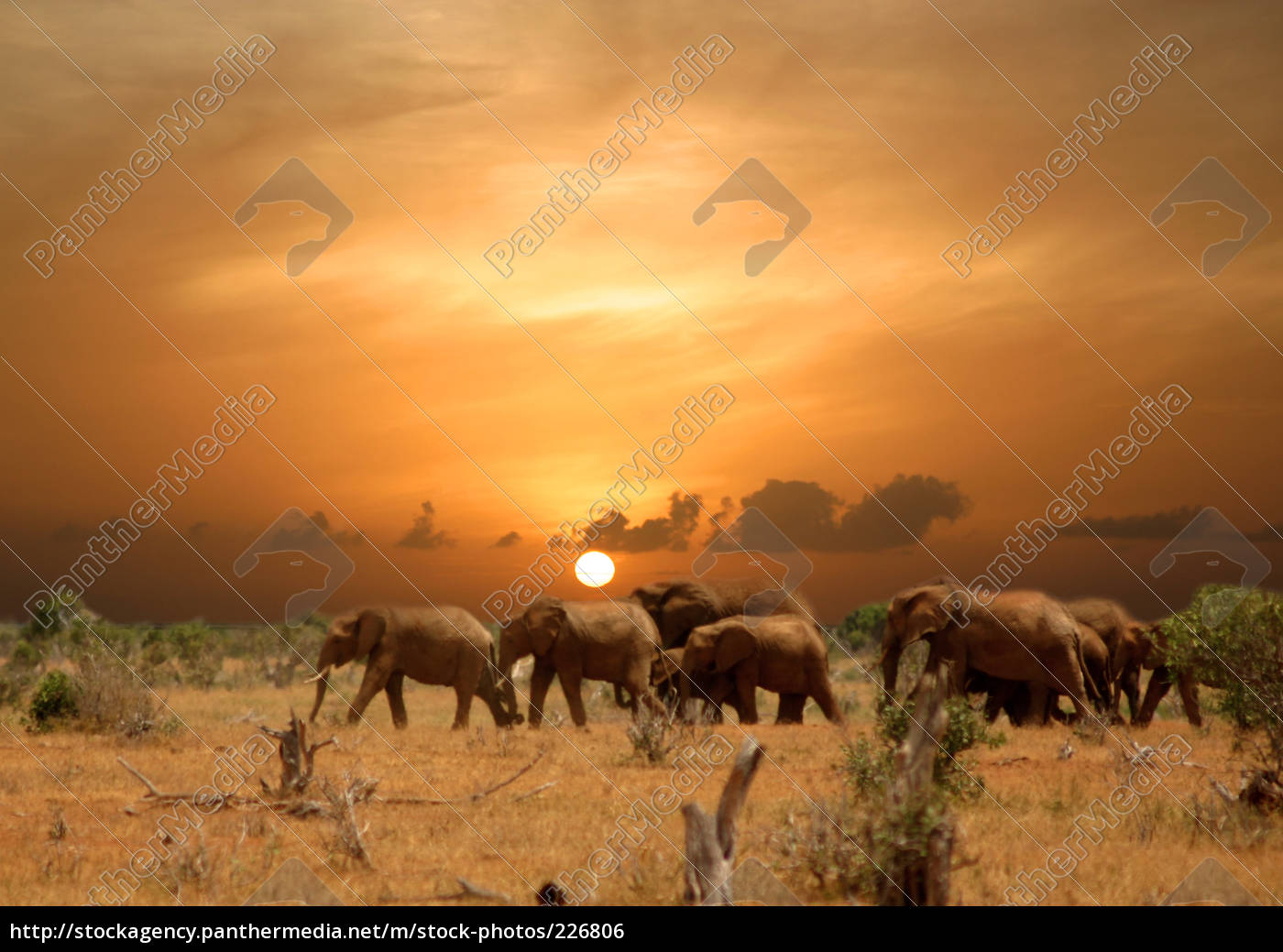 elefantenherde - 226806
