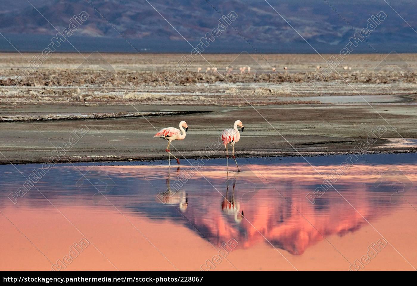 flamingos, am, see - 228067