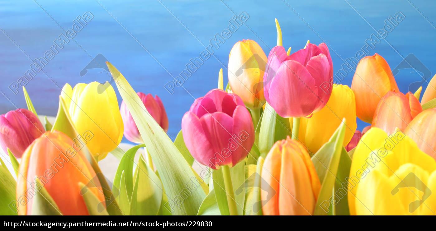 spring, awakening - 229030