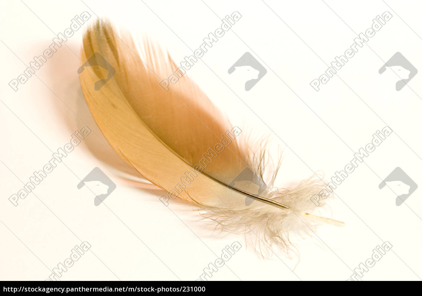 goose, feather - 231000