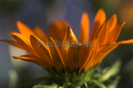 aster - 240120