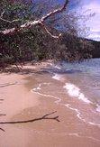 where the jungle meets the beach
