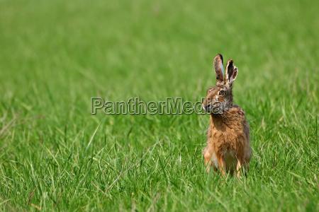 environment enviroment animal mammal green brown
