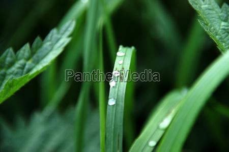 leaf green dew blade meadow drop
