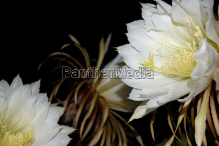 garden bloom blossom flourish flourishing night