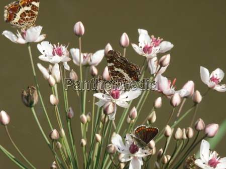 bloom blossom flourish flourishing butterfly flower