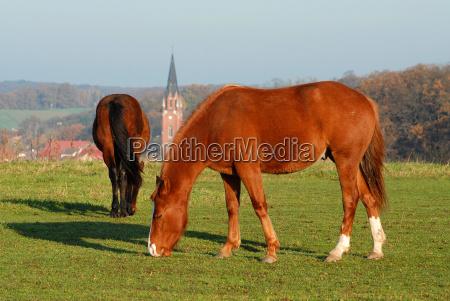 casas iglesia ciudad paseo caballo tranquilidad