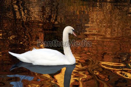 ride in golden pond