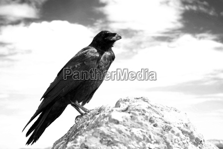 raven sw no 2