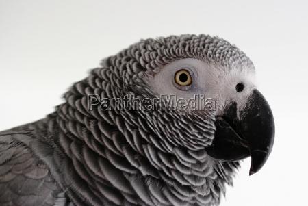 animal pet bird birds look glancing