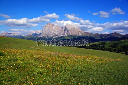 mountain meadows and mountains