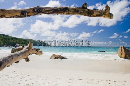 seychelles anse lazio dead tree