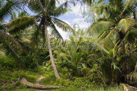 trample path through jungle