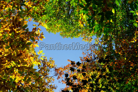 leaves firmament sky forest fall autumn