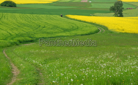ride dirt road spring fields path