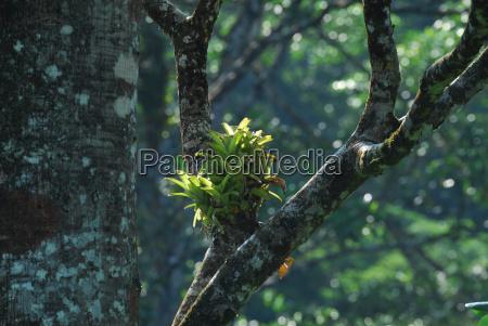counter light bromelie costa rica urwaldbaum