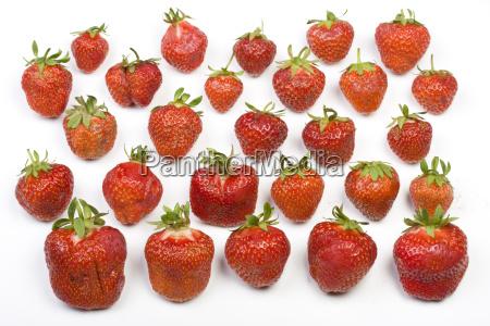 erdbeeren auf weissem hintergrund