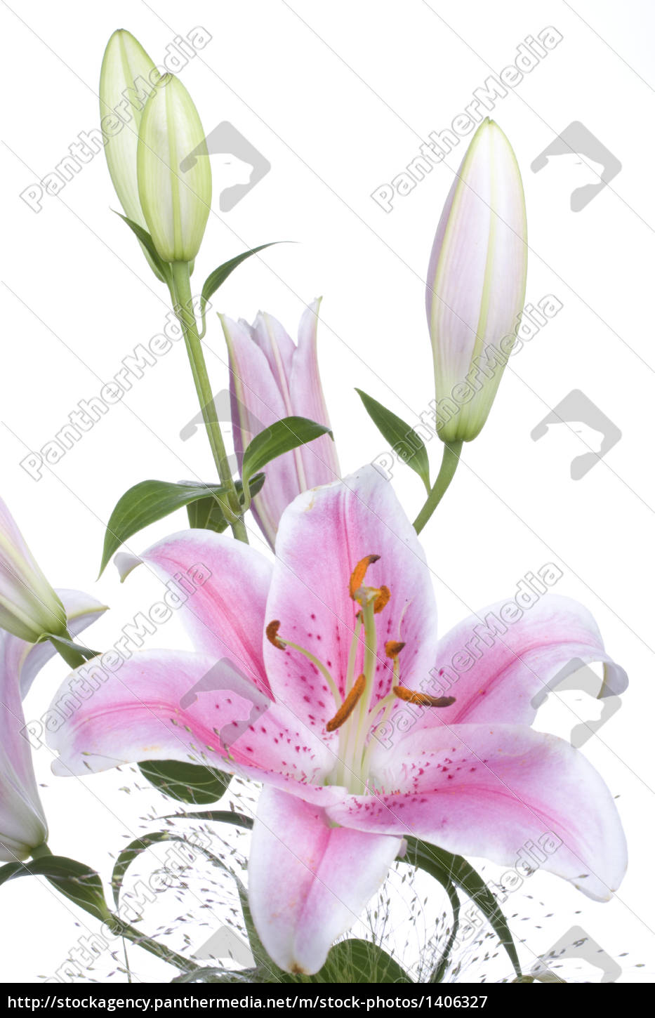 detail, of, a, lily - 1406327