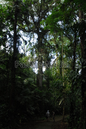 primaerregenwald
