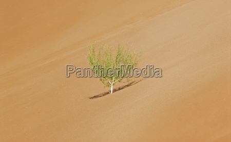 desert wasteland africa namibia dryness drought